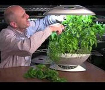 A-Complete-Guide-Containing-Quick-Fixes-For-Your-Aerogarden