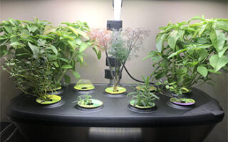 The Best Solutions To 15 Aerogarden Plant Problems You Might Encounter