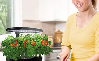 Tasty Recipes You Can Try With Your Harvested Aerogarden Plants
